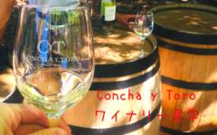 【チリのサンティアゴ】手軽に行けるConcha y Toro(コンチャ・イ・トロ)ワイナリーツアーの見どころ【5つ】